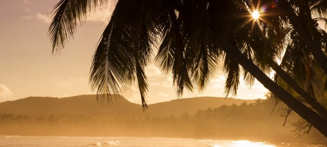 Strand-met-palmen